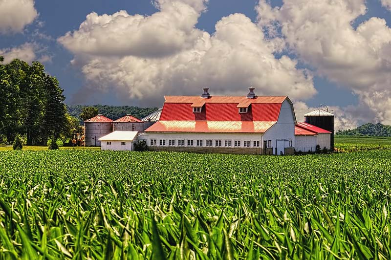 crops-in-front-of-barn