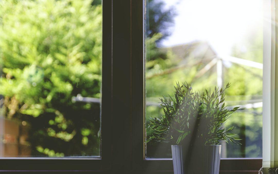 plant-on-windowsil